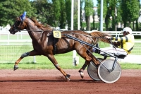 photo de DREAM DU CHATAULT