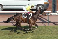 photo de WILD HORSE (IRE)