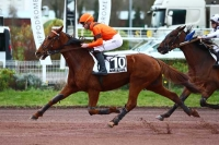 photo de DREAM DU CHOQUEL
