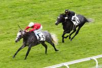photo de TIN HORSE (IRE)