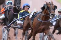 photo de ORIENT HORSE